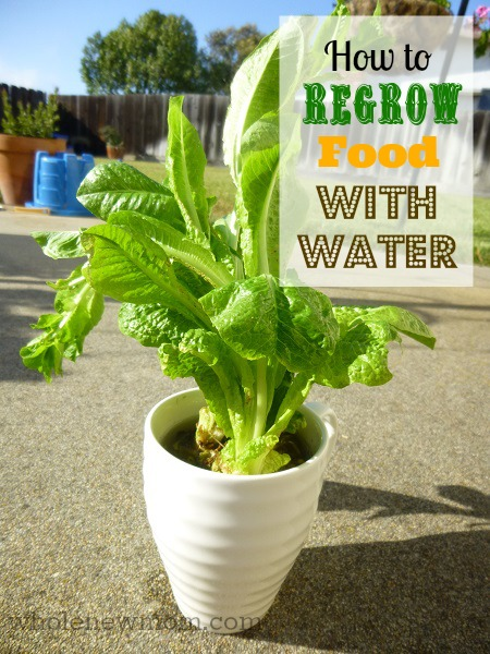 Regrow-Food-Title-Image