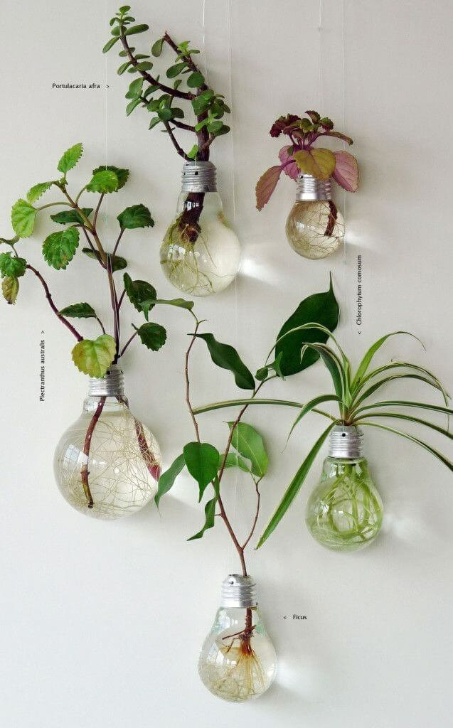 recycle-old-light-bulbs